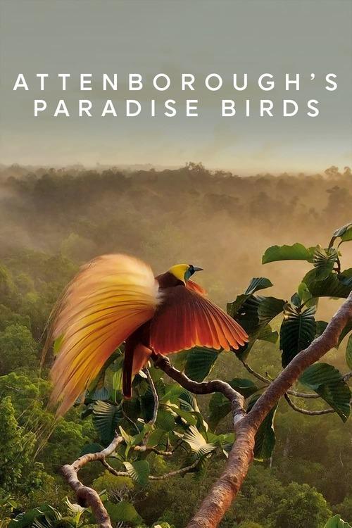 Attenborough's Paradise Birds